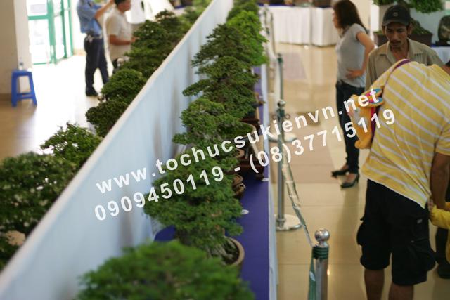 tư vấn tổ chức triển lãm bonsai TPHCM