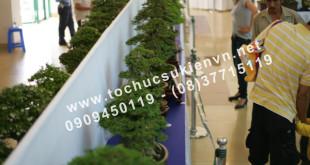 Tổ chức triển lãm Bonsai Việt Nam 11
